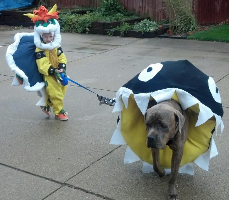 Best Dog Halloween Costumes - Slang