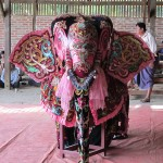 burma_elephant