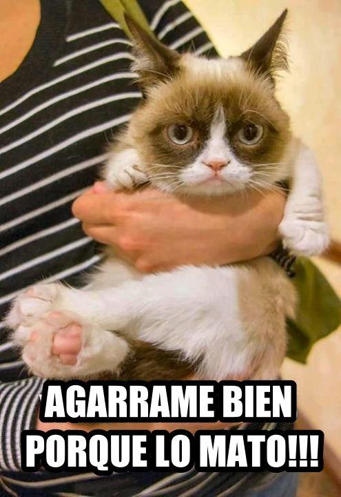 gato_memes