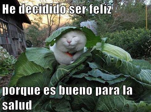 de cat spanish popular
