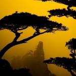 tree_5