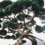 tree_momkey